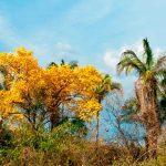 Heineken e Ministério do Meio Ambiente assinam adoção de reserva no Maranhão