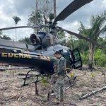 PF destrói 85 mil pés de maconha no interior do MA em nova fase da operação FUSARIUM